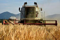 ترخیص کالای کشاورزی